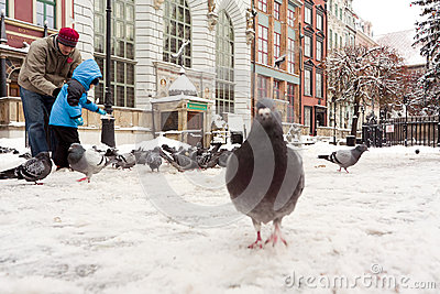 Feeding pigeons. Editorial Image