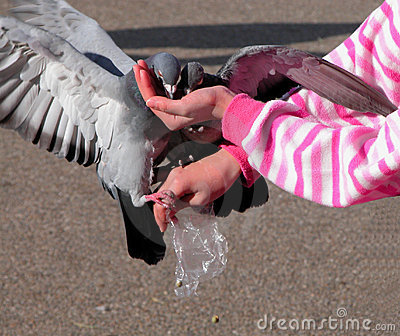 Feeding pigeons Stock Photo