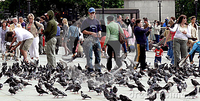 Feeding pigeons in London Editorial Photography