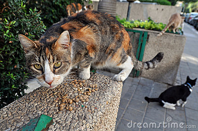 Feeding Stray Cats