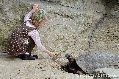 Feeding a tortoise