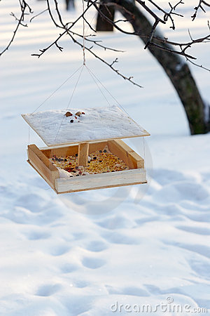 Free Feeding Trough For Birds Stock Photo - 513740
