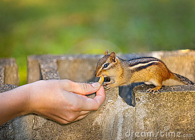 Feeding wildlife