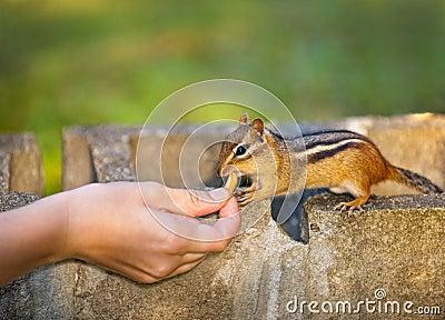 Feeding wildlife