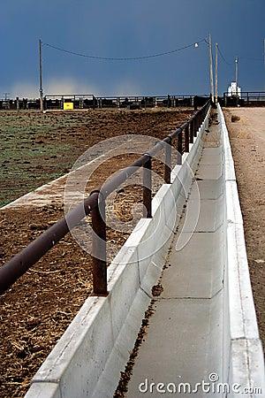 Feedlot Bunk Line Stock Photo Image 5107530