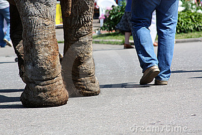 Feet of the man and elephant