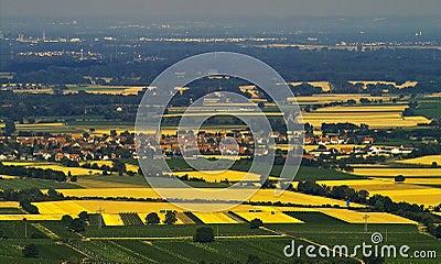 Felder des Goldes