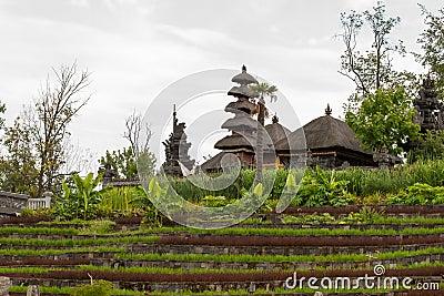 Felder eines Reises mit Dorf im Hintergrund