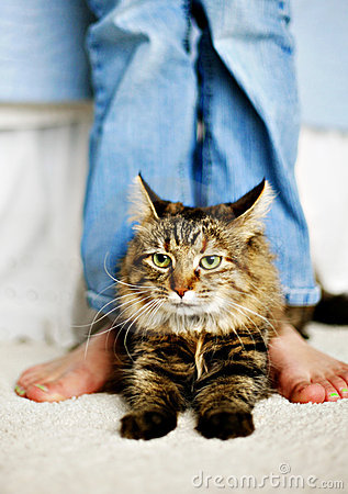 Free Feline & Feet Royalty Free Stock Photos - 1959518