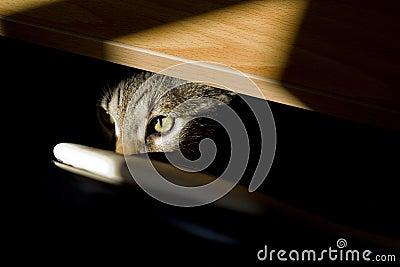 Feline look