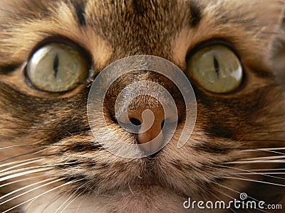 Feline nose