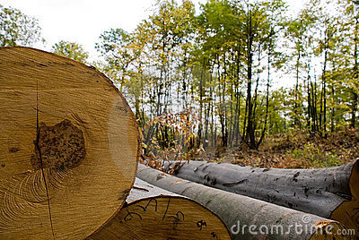 Felled timber