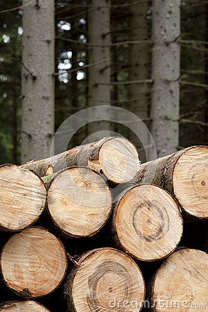Felled wood
