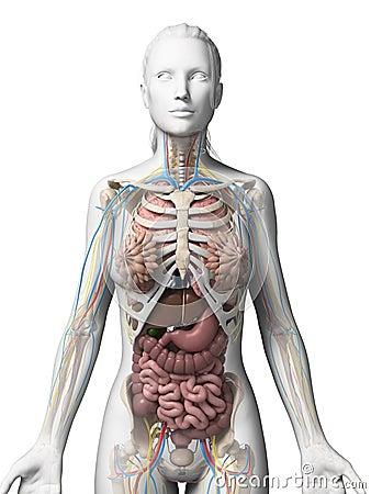 Female anatomy photographs