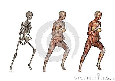 Female Anatomy Running
