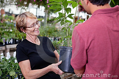 Female buying potted plant