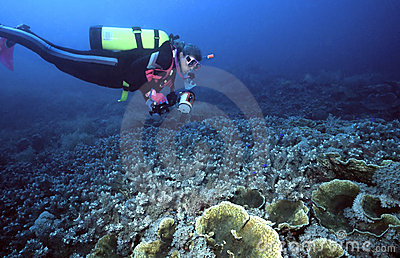 Female Diver and Indo corals
