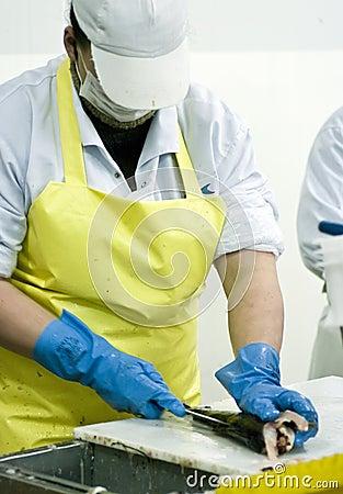Female fish cutter at work