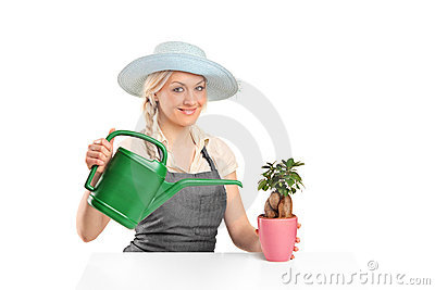 Female florist watering a bonsai tree