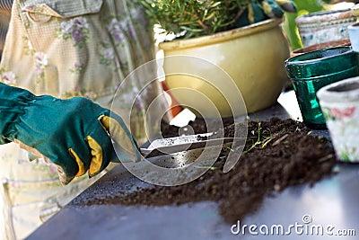 Female gardener potting new plants