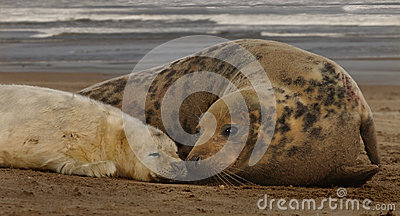 Female Seal with her Pup