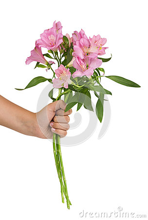Free Female Hand Giving A Bunch Of Pink Alstroemerias Isolated Stock Photo - 78266630