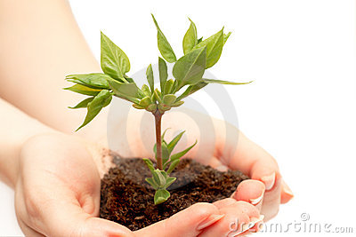 Female hand holding a small tree