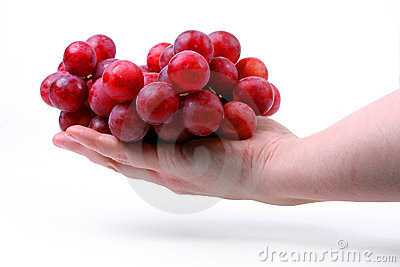 The female hand holds one grapes.
