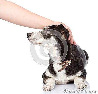 Female Hand Patting Dog Head. Isolated On White Ba Stock Photo - Image: 44025393
