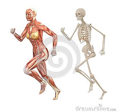 Female Human Skeleton Diagram