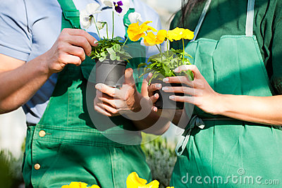 Female and male gardener in market garden