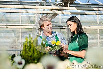 Female and male gardener in market garden or nursery