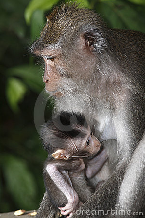 Female Monkey with Infant