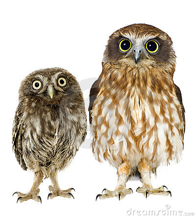 Free Female Owl And A Owlet Stock Photography - 3182092