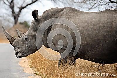 Pics Of A Female Black Rhino 119