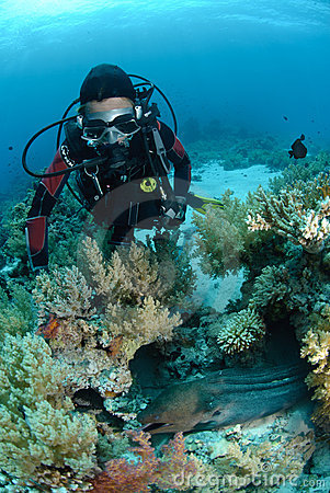 Female scuba diver observing a Giant moray eel