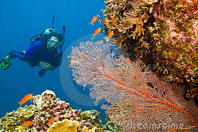 Female scuba diver viewing gorgonian sea fan