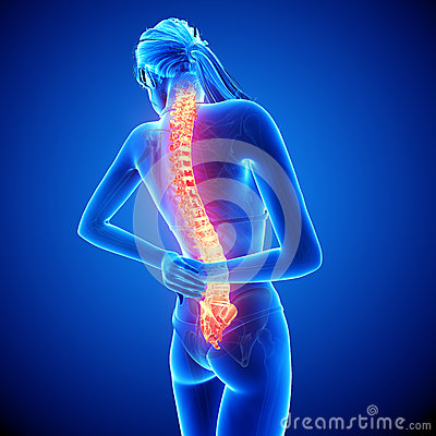 Female spine pain