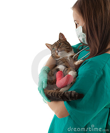 Female vet with cat in surgery