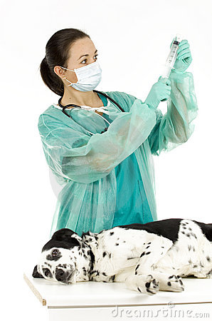 Female vet  with dog in surgery