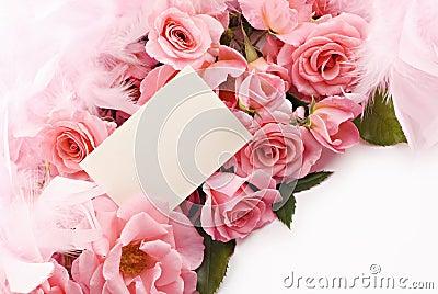 Feminine Pink Rose Still life