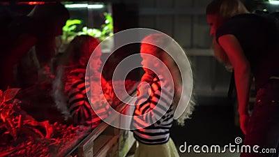Femme avec enfants regardant dans un aquarium rouge éclairé avec des animaux exotiques clips vidéos