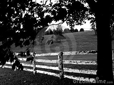 Fence black & white