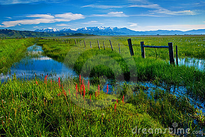 Fence and Creek along a rich green Marsh