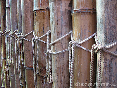 Fence of dry bamboo
