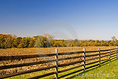 Fence and Fall Cornfield