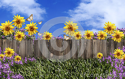 Fence Flowers Blue Sky