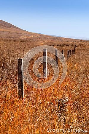 Fence grassland