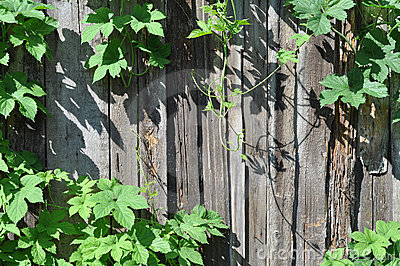 Fence and plant