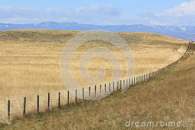 Fence Row in Eastern Wyoming